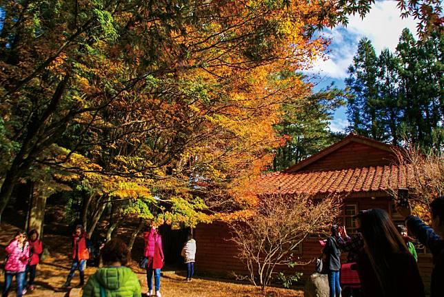 秋冬遊參山泡湯、賞楓、吃美食 省錢又好玩